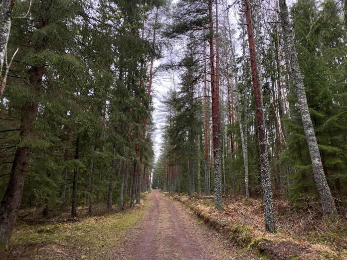 Põhja-Kõrvemaa-03