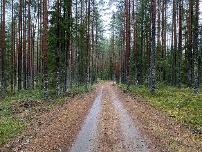 Põhja-Kõrvemaa-08